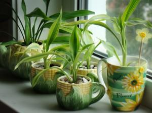 Старих прикмет про кімнатні рослини