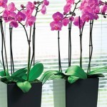 orchid_400