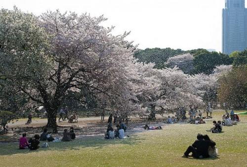 japan-hunami
