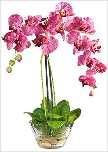 Орхідея взимку