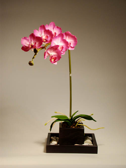 phalaenopsis взимку